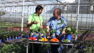 #609 Snackgemüse für Hausgarten, Balkon und Terrasse