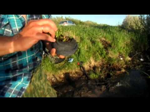 как правильно хранить червей для рыбалки видео