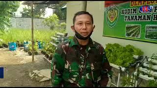 TNI Pelopori Pemanfaatan Lahan Sempit Jadi Tanaman Hidroponik dan Ternak (HARIANSIBER TV)