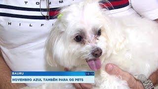 Novembro Azul: campanha alerta para a prevenção do câncer de próstata também em cães e gatos