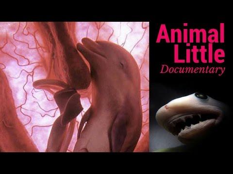 ecco come sono gli animali nel pancione della mamma