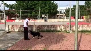 Boni Adestra - Anita com sete anos de idade, iniciando no treino de faro - Parte 3