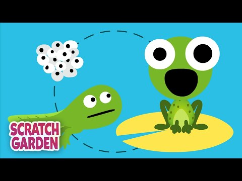The Life Cycle Song | Science Songs | Scratch Garden