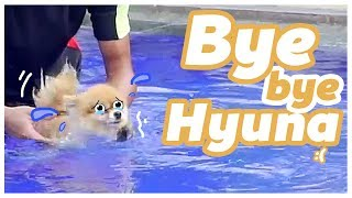 Video BABY EL vs HYUNA DOGGIE Wkwkwkwk MP3, 3GP, MP4, WEBM, AVI, FLV Desember 2018