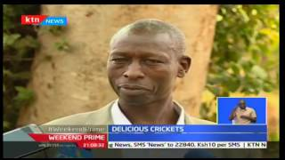 Weekend Prime: Cricket Rearing Now Taking Root In Nyeri As A Culinary Delight