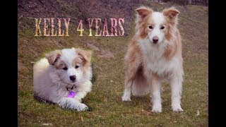 Collie Australia  City new picture : Border Collie Kelly - 4 yrs