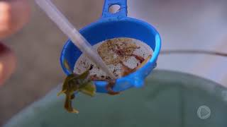 Marília reforça combate contra mosquito aedes aegypti