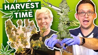 IT'S HARVEST TIME!✂️ –First Time Growing Weed at Home by That High Couple