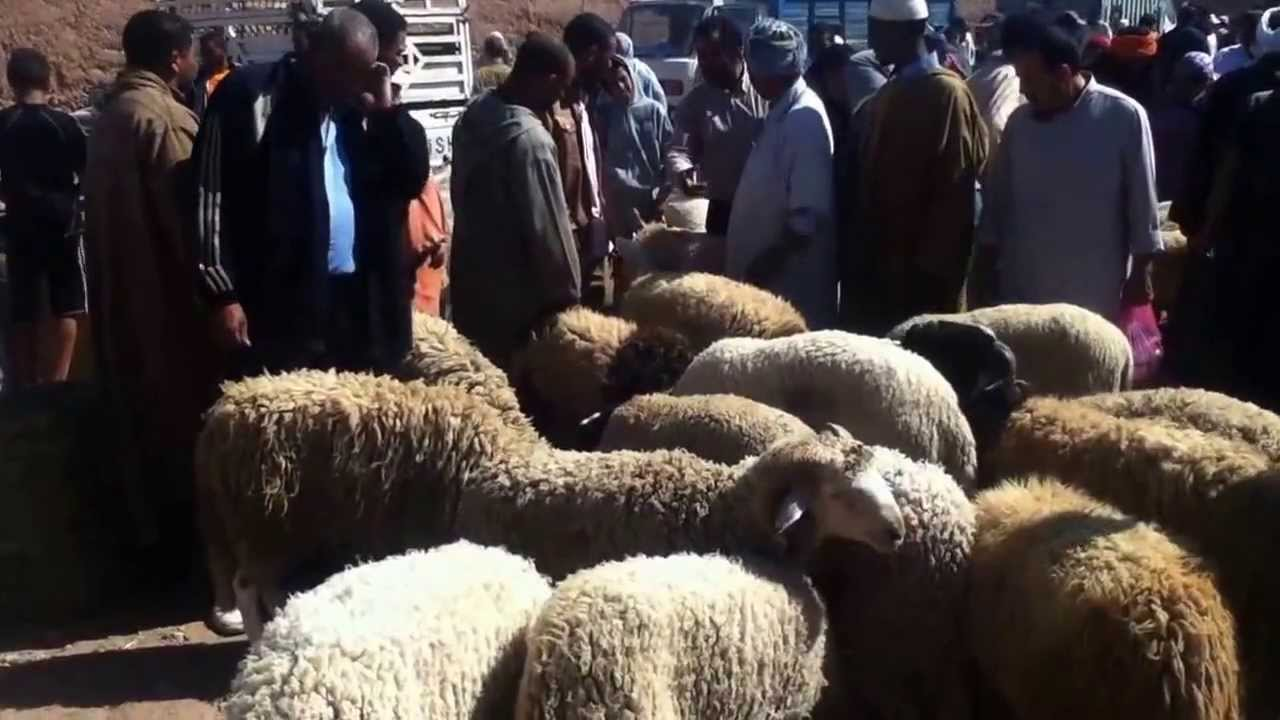 Youths and Al Adha feast