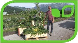 Instant gardening mit Paletten