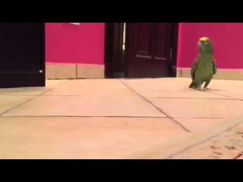 guardate cosa fa questo pappagallo!