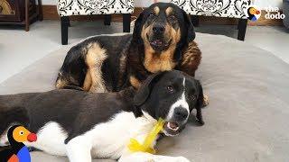 ボクは元気だよ、みんなもいっしょに遊ぼう!余命を宣告された犬、老犬たちのおうちに旋風をもたらす