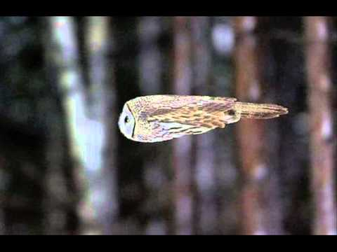 Video Alwoods - Flying Owl download in MP3, 3GP, MP4, WEBM, AVI, FLV January 2017