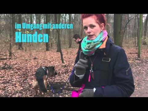 Hundeschule Einzeltraining