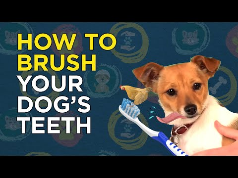 How to Brush Your Dog's Teeth (Canine Dental) - VetVid Episode 007