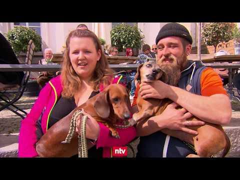 Dackel-Fest in Passau: Alles für den Dackel | n-tv