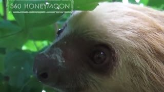 We found a SLOTH in our garden!