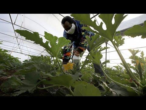 Ιταλία: Σχέδιο νομιμοποίησης χιλιάδων παράνομων μεταναστών…