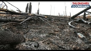 """Sau bài phản ánh """"Nước mắt của rừng và tiếng vọng của người dân"""" về việc các cánh rừng tại huyện Lục Nam, Bắc Giang bị tàn phá nặng nề, PV đã đi tìm câu trả lời cho vấn đề này..."""