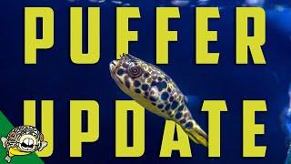 Schoutedeni Puffer Tank Update by Aquarium Co-Op