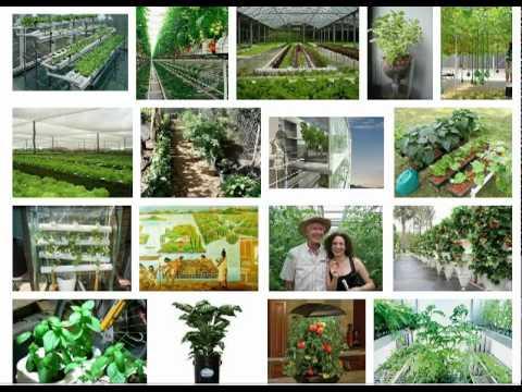Hydroponics Gardening Explained