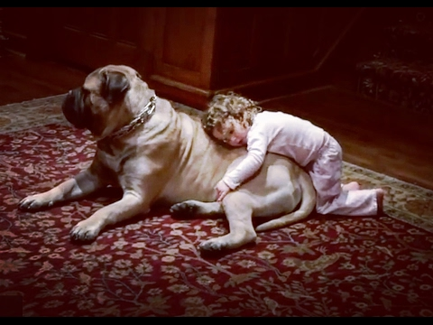 A precious moment between a kid and her bullmastiff