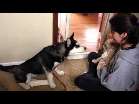 Sasha checking out Charlie