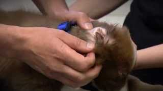 ADVANCE Puppy Care - Home Health Check