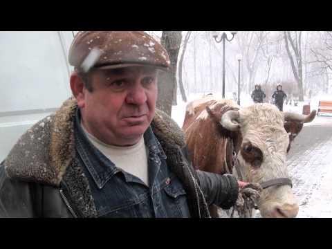 ДАІ питає документи у Корови