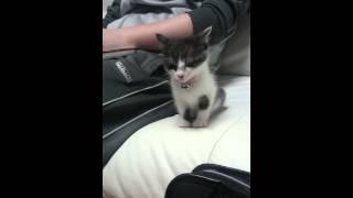 Mały kociak nie chciał spać sam! Wtedy zrobił coś, co roztopi serce największego twardziela!