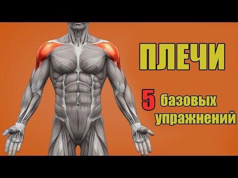 ПЛЕЧИ. 5 БАЗОВЫХ УПРАЖНЕНИЙ. + ОШИБКИ УБИВАЮЩИЕ ПРОГРЕСС - DomaVideo.Ru