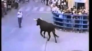 Rozwścieczony byk rozpoznaje człowieka, który go karmił