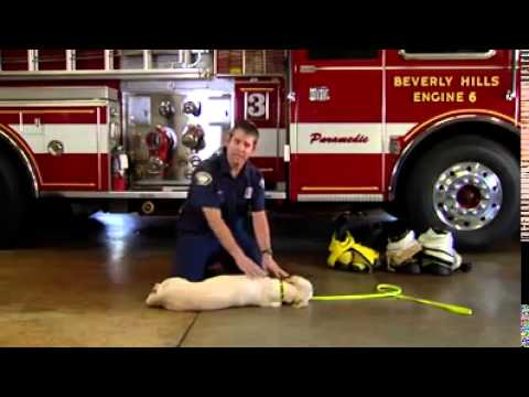 簡單幫狗狗急救的方法