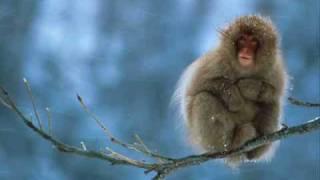 Proudest Monkey Dave Matthews Band