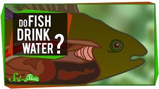 Download Youtube: Do Fish Drink Water?