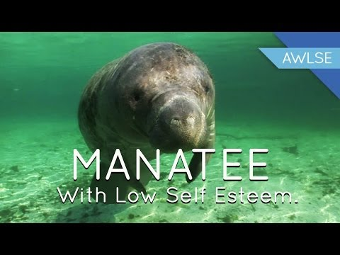 Manatee With Low Self Esteem: Life is Meaningless