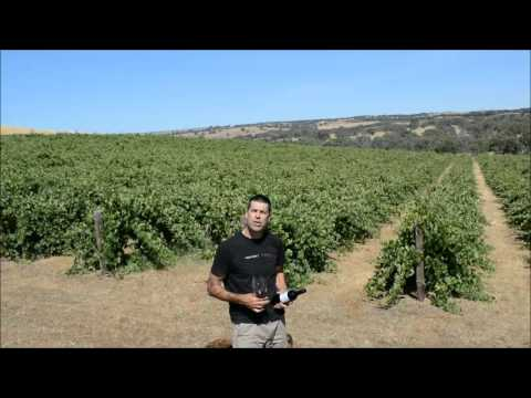 Elderton Wines High Altitude Shiraz video tasting note