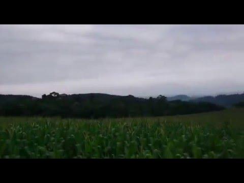 Lavoura de Milho Agroeste 1666, com 84 dias - Alto Fruteira, Laurentino, SC, Brasil, 12.11.2015.