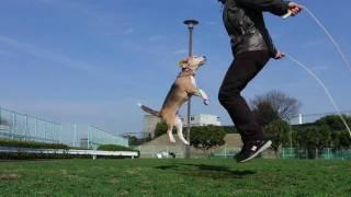 Собака и скакалка
