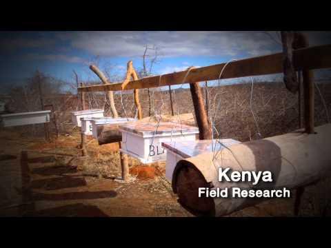 Penn State: Inspiring Research – Honey Bees