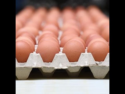 200 million eggs recalled over salmonella fears