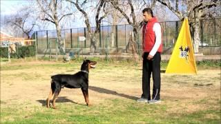 Profesyonel Köpek Eğitimi 1 videosunun kapak resmi
