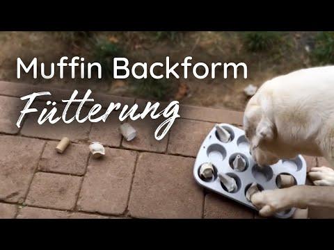 Der Muffins Napf
