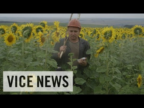 Exclusive VICE News Footage of MH17 Aftermath%3A Russian Roulette %28Dispatch 60%29