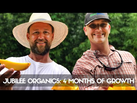 3-Acre Food Forest ONLY 4 MONTHS After Install: Jubilee Organics' Oceanfront Farm