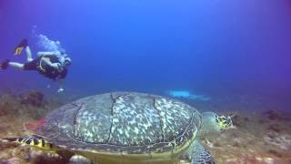 Spotted while scuba diving in Mexico