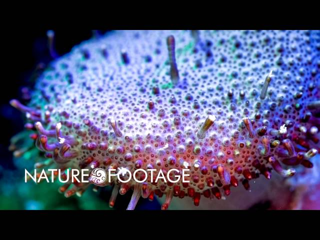 Video Highlight Coral Reef Time-Lapse