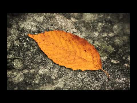 Autumn Leaves - Martin Lane