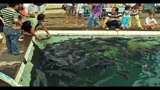 Video Misteri Ikan Dewa Ikan Keramat Di Indonesia On The Spot Trans 7 Terbaru Februari 2017 MP3, 3GP, MP4, WEBM, AVI, FLV Februari 2019