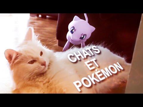 Cats vs Pok mon